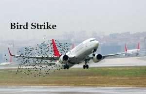 bird strike ritardo aereo